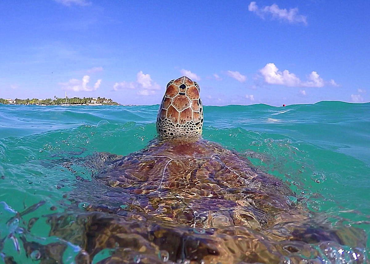 New Sea Turtle Care Center and Museum for Akumal - The