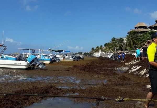 Massive arrival of seaweed is expected to continue until August