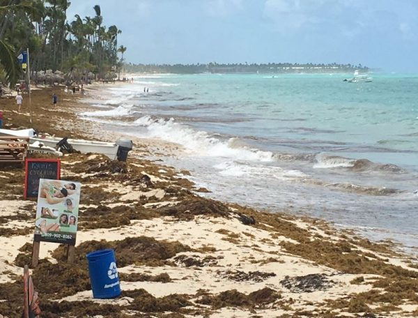 Michael caused massive arrival of sargassum to Isla Mujeres - The