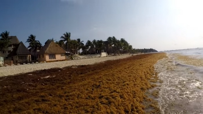 So how bad is the seaweed problem in Playa del Carmen? (VIDEO) - The